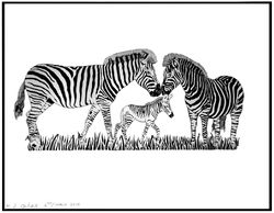 Zebra Commission by Kelvin Coles. Prints Available in A3 £17.50 + P&P or A4 £10.00 + P&P.